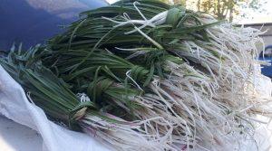 چوب حراج بر تن رنجور گیاهان دارویی کهگیلویه و بویراحمد